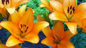 Цветки поля и сада Стоковые Фото