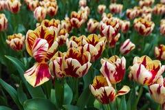 Цветки - предпосылка природы флористическая Стоковое Изображение