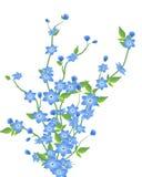 цветки предпосылки изолировали белизну Стоковые Изображения
