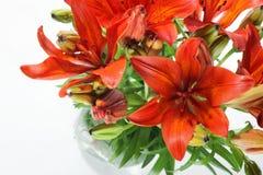 цветки предпосылки изолировали lilly белизну лета стоковые фотографии rf