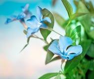 цветки предпосылки красивейшие голубые стоковая фотография rf