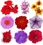 цветки предпосылки цветастые изолировали белизну Стоковая Фотография