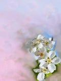 цветки предпосылки Стоковое Изображение