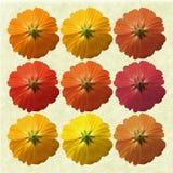цветки предпосылки cream греют Стоковое Изображение