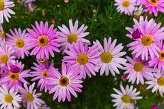Цветки - предпосылка природы флористическая Стоковая Фотография