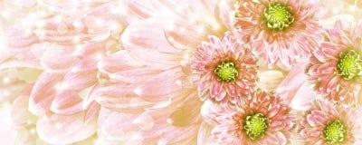 цветки предпосылки красивейшие красные Стоковые Фото
