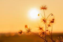 Цветки предпосылки природы внутри на оранжевом заходе солнца Стоковые Фото