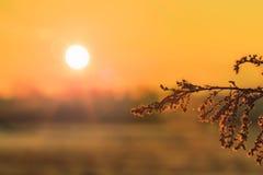 Цветки предпосылки природы внутри на оранжевом заходе солнца Стоковые Фотографии RF