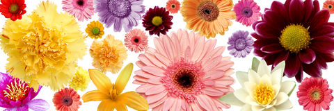цветки предпосылки цветастые Стоковые Изображения RF