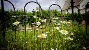 Цветки приближают к загородке Стоковые Изображения