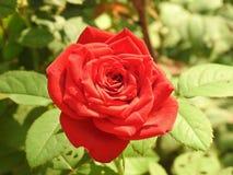 Цветки 3 природы красивые стоковые фото