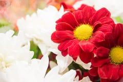 Цветки природы ландшафта Стоковое Изображение