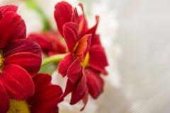 Цветки природы ландшафта Стоковая Фотография RF