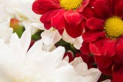 Цветки природы ландшафта Стоковые Фото
