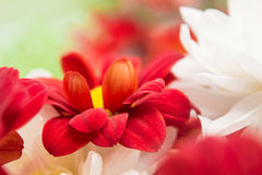 Цветки природы ландшафта Стоковое Изображение RF