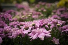 Цветки природы после дождя Стоковые Изображения