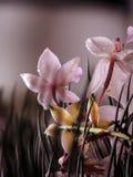 цветки природы Стоковые Фото