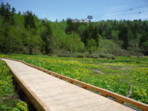 Цветки променада и зеленое поле Стоковое фото RF