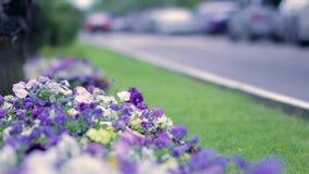 Цветки против запачканной дороги и движения сток-видео