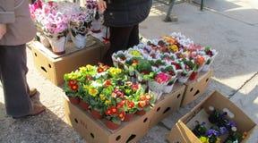 Цветки продажи улицы Стоковое фото RF