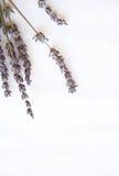 цветки пука изолировали белизну лаванды Стоковое Изображение