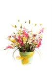цветки пука различные Стоковое Изображение RF