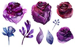 Цветки пурпура акварели Сирень и голубой флористический вектор Стоковые Изображения RF