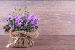Цветки пурпура колокольчика Стоковые Изображения RF
