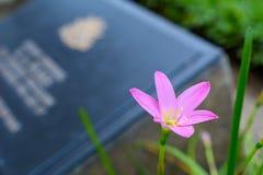 Цветки пурпура около кладбища Стоковое Изображение RF