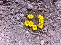 Цветки пустыни chile озера copin Стоковое Изображение