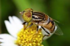 Цветки пчел Стоковое Изображение RF