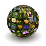 Цветки планеты бесплатная иллюстрация
