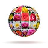 Цветки планеты Стоковые Фотографии RF