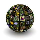 Цветки планеты стоковое изображение