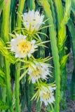 Цветки плодоовощ дракона Стоковая Фотография
