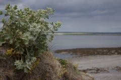 Цветки пляжа Стоковое Изображение RF