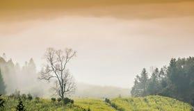 цветки рапса дерева тумана Стоковые Изображения RF
