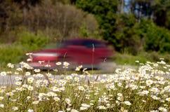 Цветки растут вдоль дороги Стоковое Фото