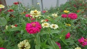 Цветки растут от естественной почвы стоковое фото rf