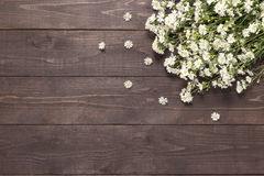 Цветки резца на деревянном для вашего текста Стоковые Изображения