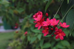 Цветки рекой Стоковое Изображение RF