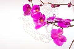 Цветки розовых орхидеи и шариков от белых перл Стоковая Фотография
