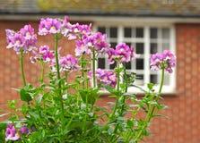 Цветки сада малой страны крыши Стоковые Фото