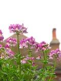 Цветки сада малой страны крыши Стоковые Фотографии RF