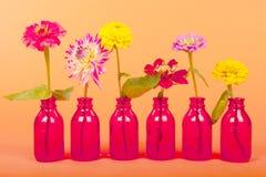 Цветки сада на померанце Стоковые Изображения RF