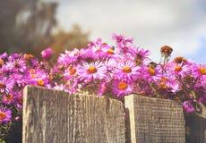 Цветки сада под деревенской загородкой Стоковые Изображения RF