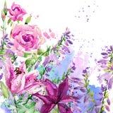 Цветки сада акварели знамя предпосылки цветет формы меньшяя розовая спираль Стоковые Изображения RF