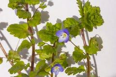 Цветки сада весны Стоковое Изображение