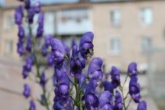 Цветки сада в лете Стоковое Фото