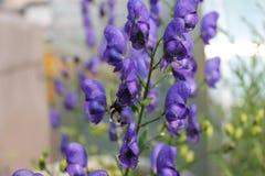 Цветки сада в лете Стоковое Изображение